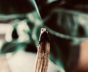 Le bois de Palo Santo et ses Bienfaits